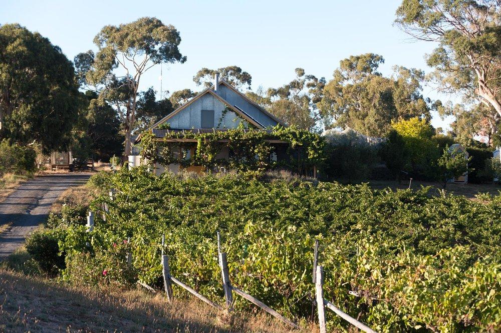 Zig Zag Rd Wines cellar door and vines