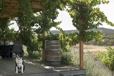Zig Zag Rd Wines Cellar Door Dog