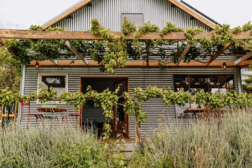 Zig Zag Rd Winery cellar door spring